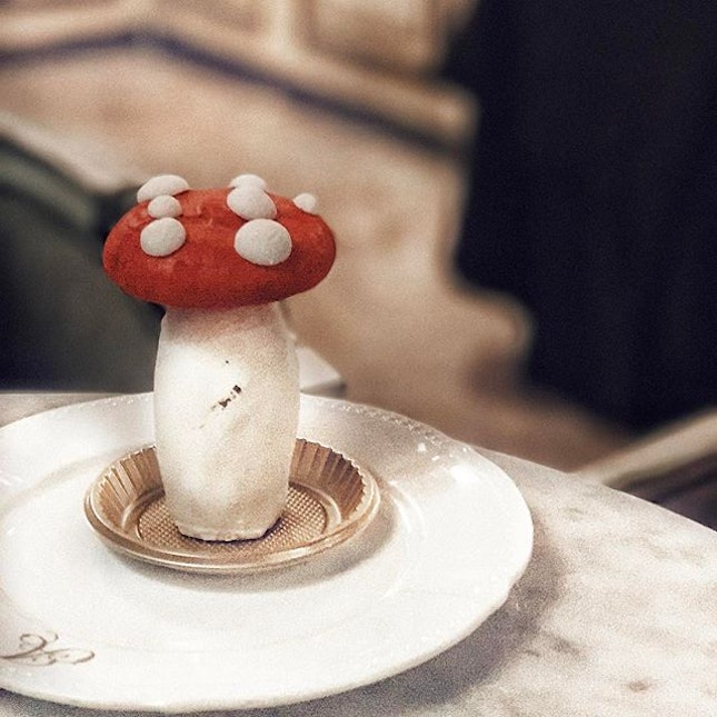 • 🍄🍄🍄🍄🍄🍄 // Are you a mushroom lover?