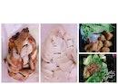 Tian Tian Hainanese Chicken Rice (Simpang Bedok)