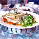 [Extra Super Tanker] Steamed Spotted Coral Grouper / 七星斑 (Qī xīng bān) in Superior Soy Sauce RM207 / S$70 🐟.
