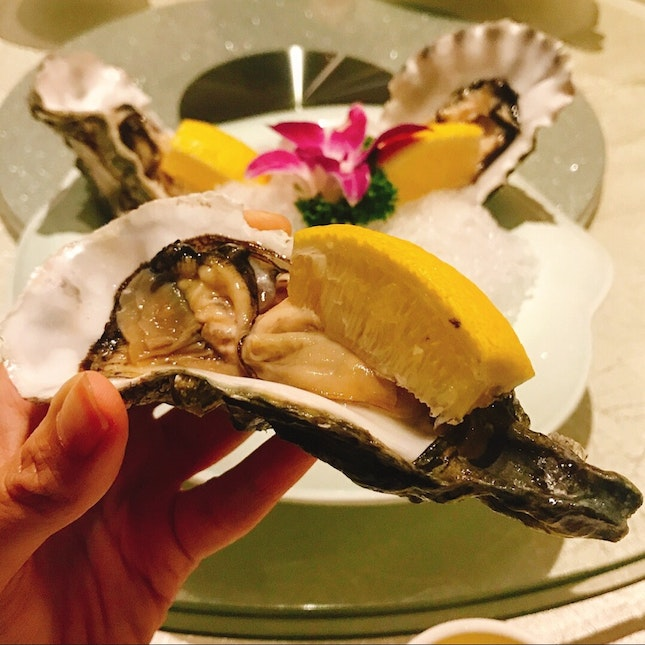 American Oysters (S)