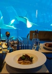 Dining In An Aquarium?!